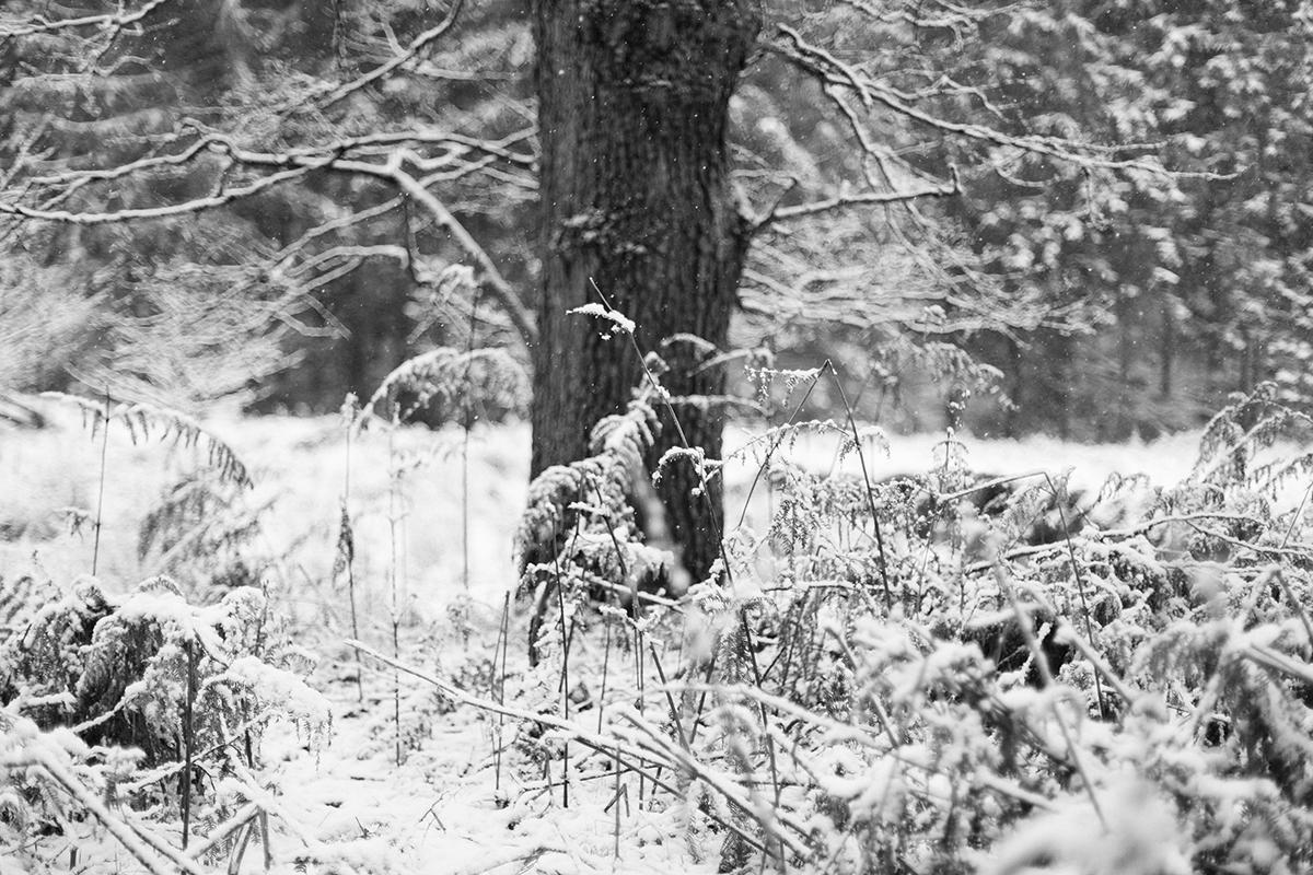 Landschaftfotografie und Naturfotografie aufgenommen von der Berliner Fotografin Caroline Wimmer in der Sächsischen Schweiz an einem Wintertag, grafische Schwarz-Weiß- Fotografie