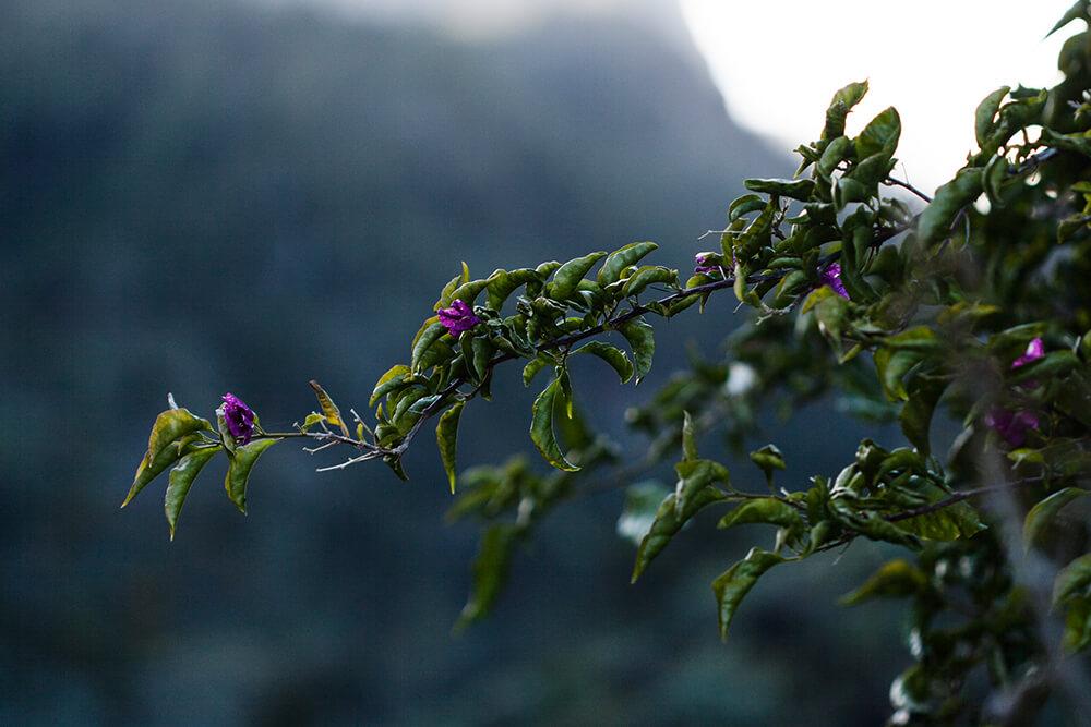 Travel Photography landscape La Gomera canary islands