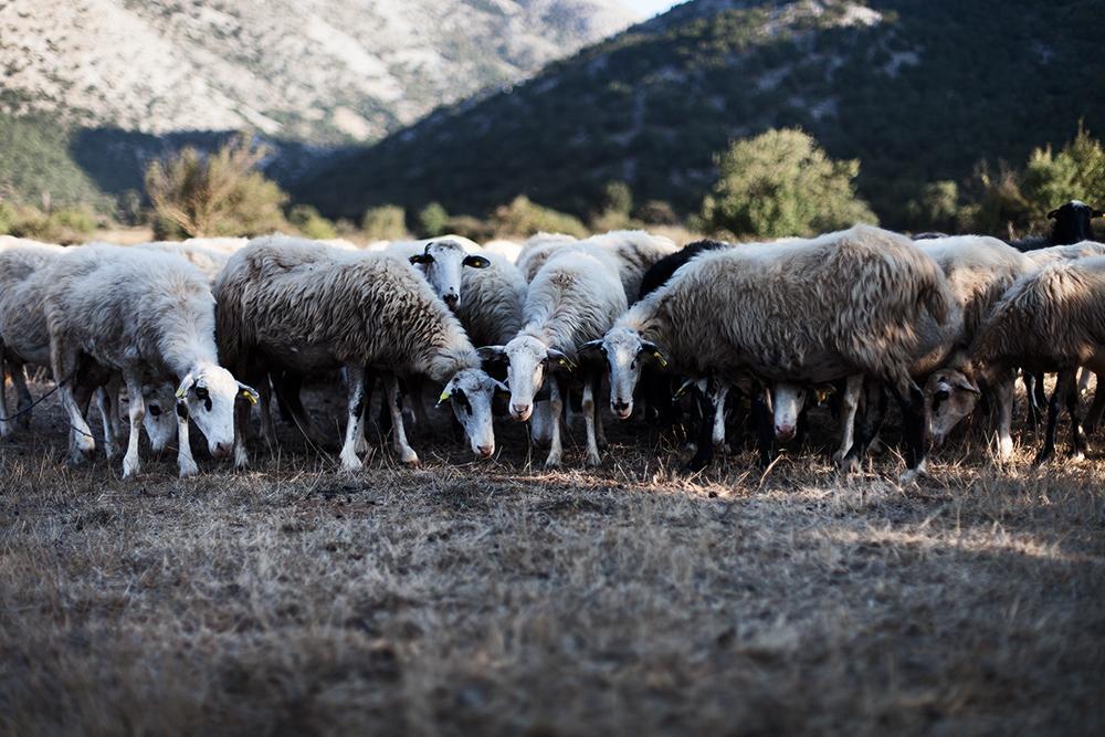 Travelphotography Landscape Crete Greece
