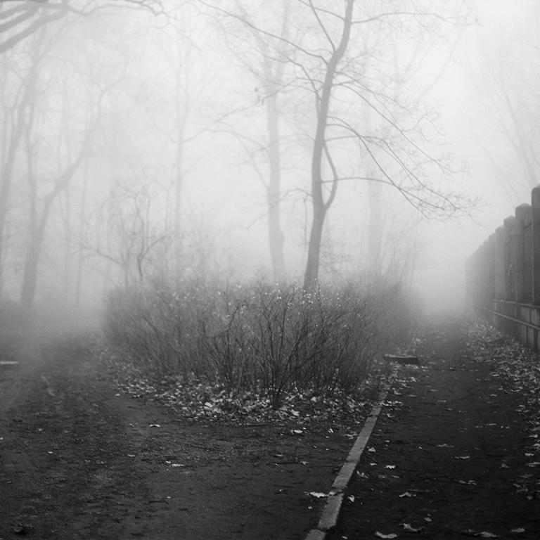 photography berlin landscape city nature fog atmosphere