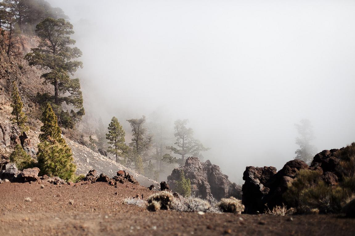 photography landscape nature canary islands teneriffe fog