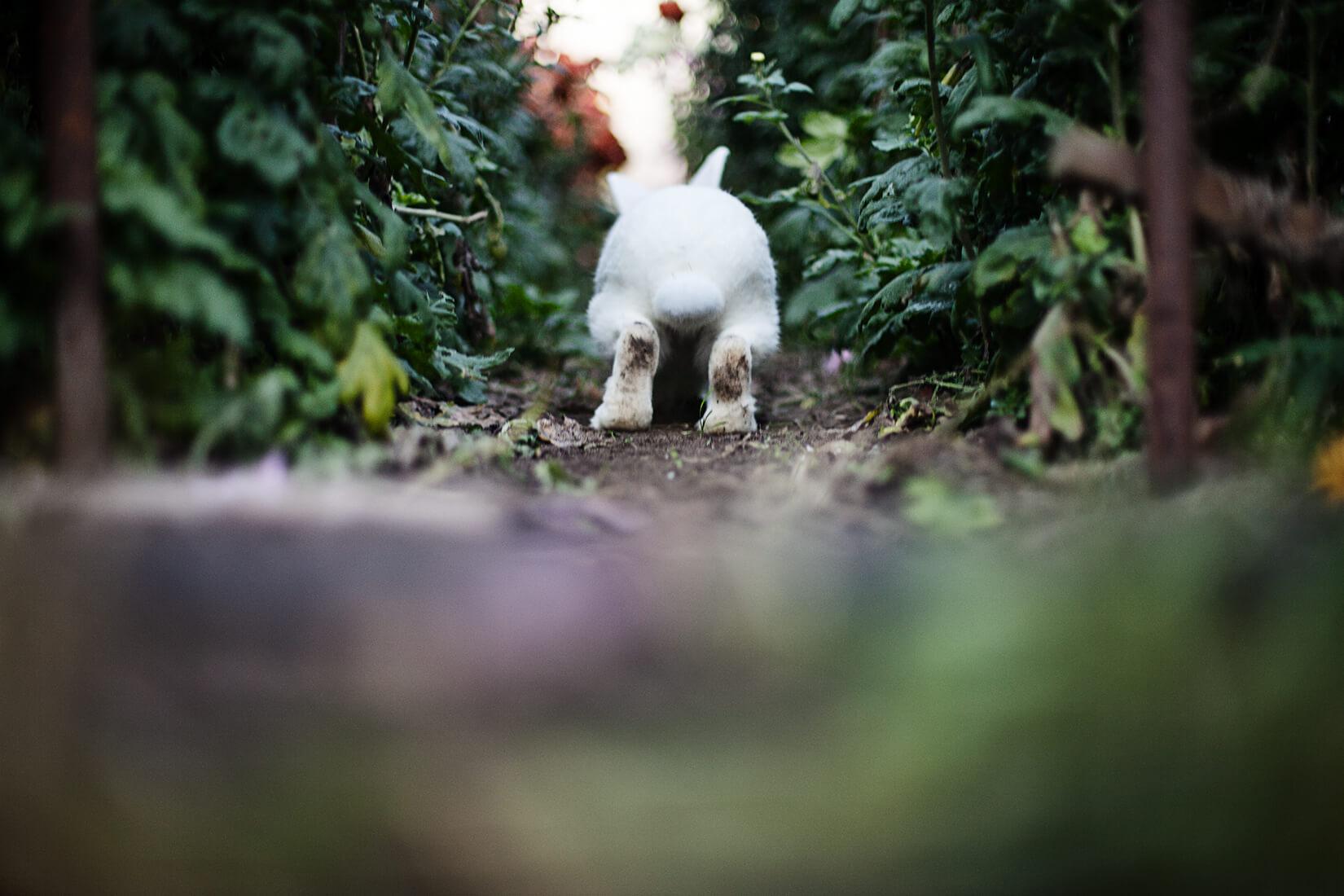 Freies Fotoprojekt Tierfotografie mit Albino Hase aufgenommen von der Berliner Fotografin Caroline Wimmer