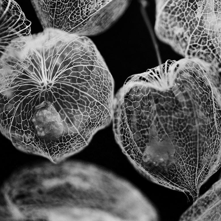 Natur detail Fotografie makrofotografie makro berlin studio