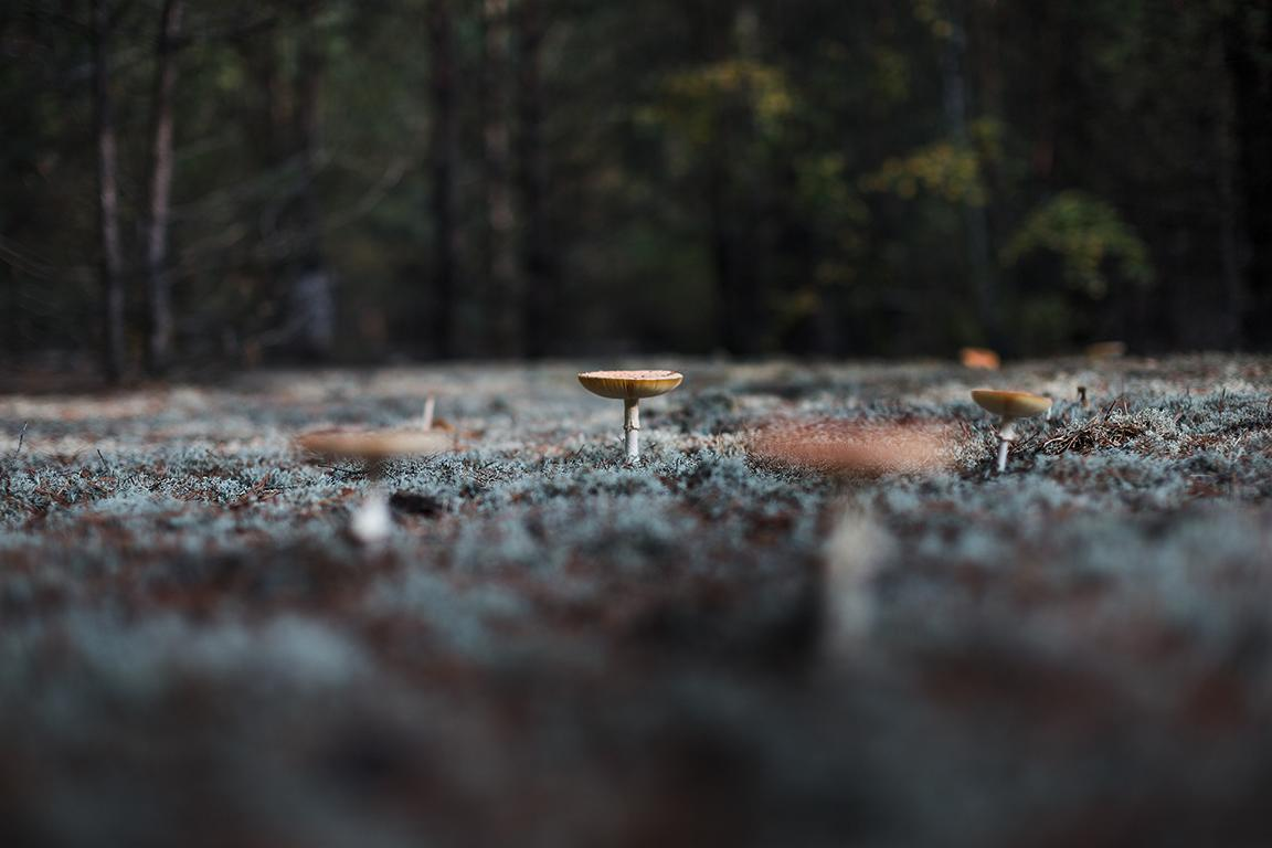 Landscape and nature photography by berlin photographer Caroline Wimmer