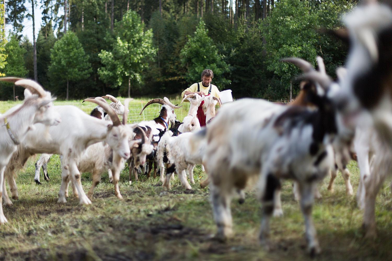 portrait serie und Fotodokumentation eines Mannes und seiner Ziegen