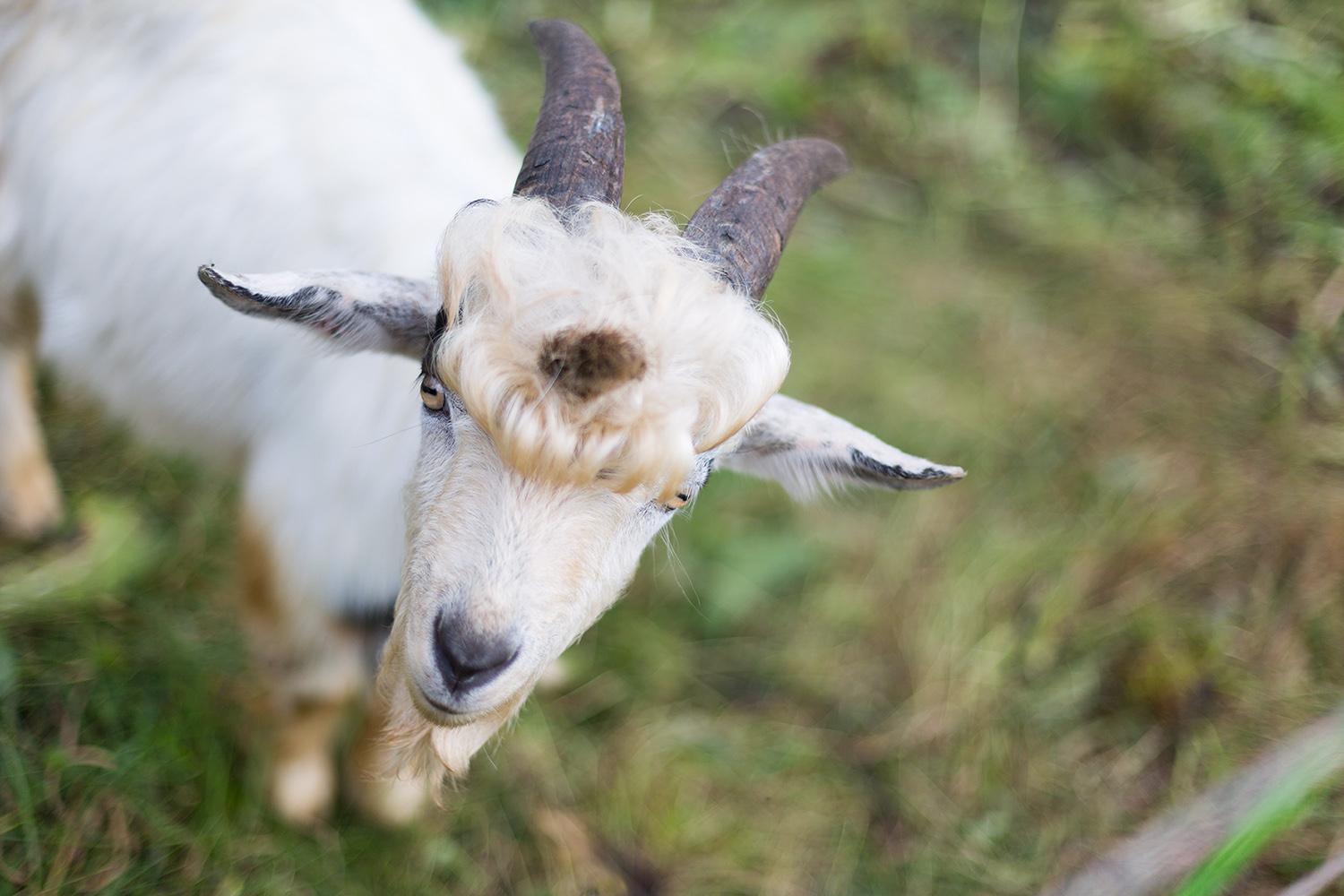 Portrait photography story and documentation of bavarian Stefan Mayr and his goats and dog