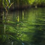 nature photography by Berlin photographer Caroline Wimmer pictures of lakes, reed and water lilies
