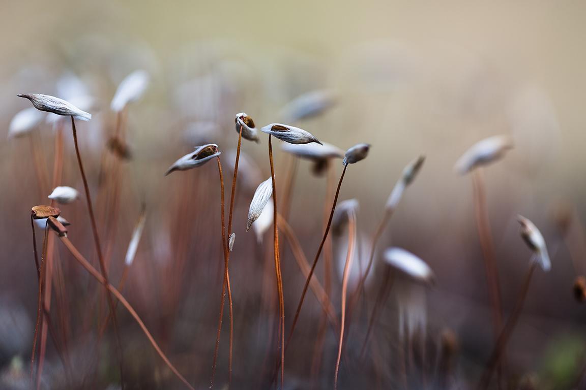 Makrofotografie und Naturfotografie der Fotografin Caroline Wimmer aus Berlin