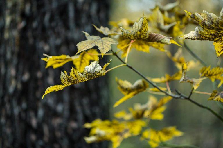 Autumn – KLICK TO ENTER