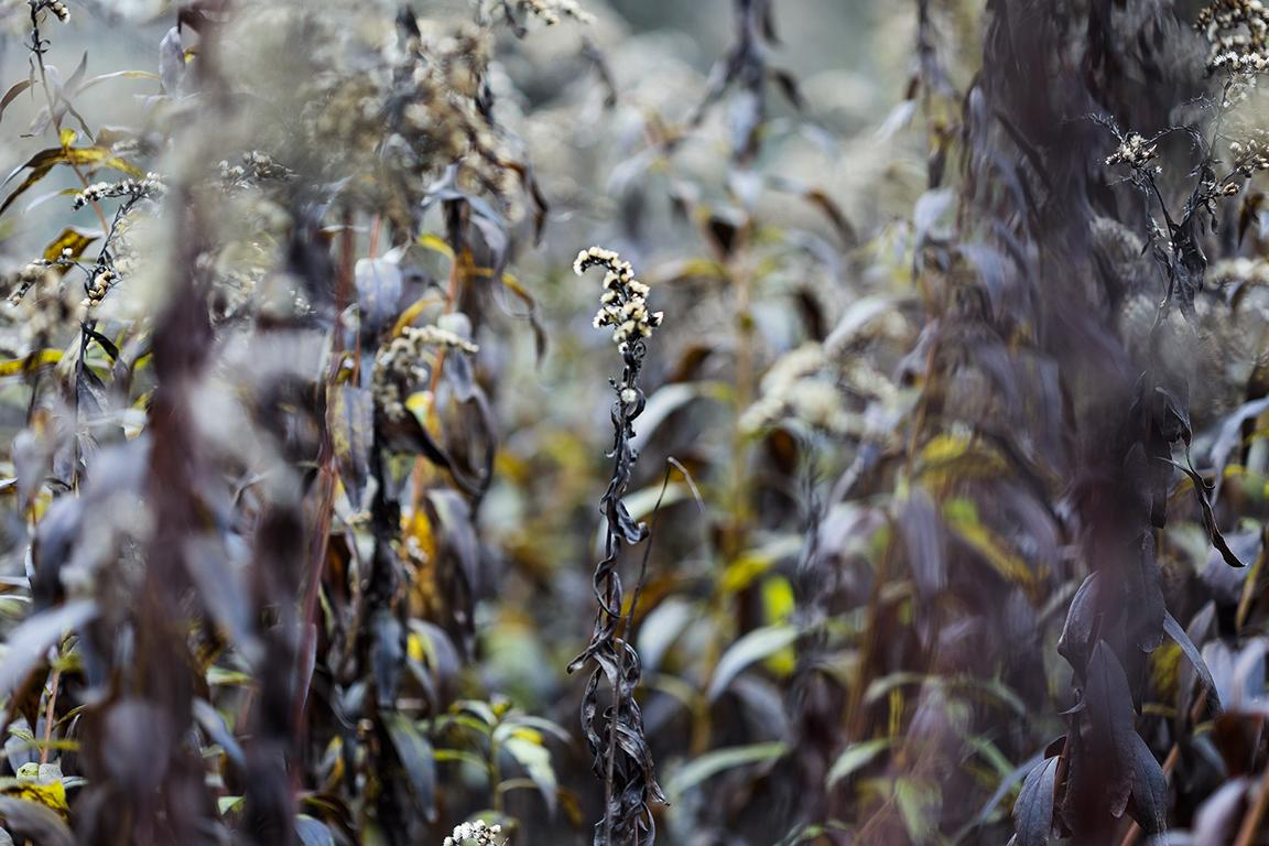 Nature and landscape photography by berlin photographer Caroline Wimmer